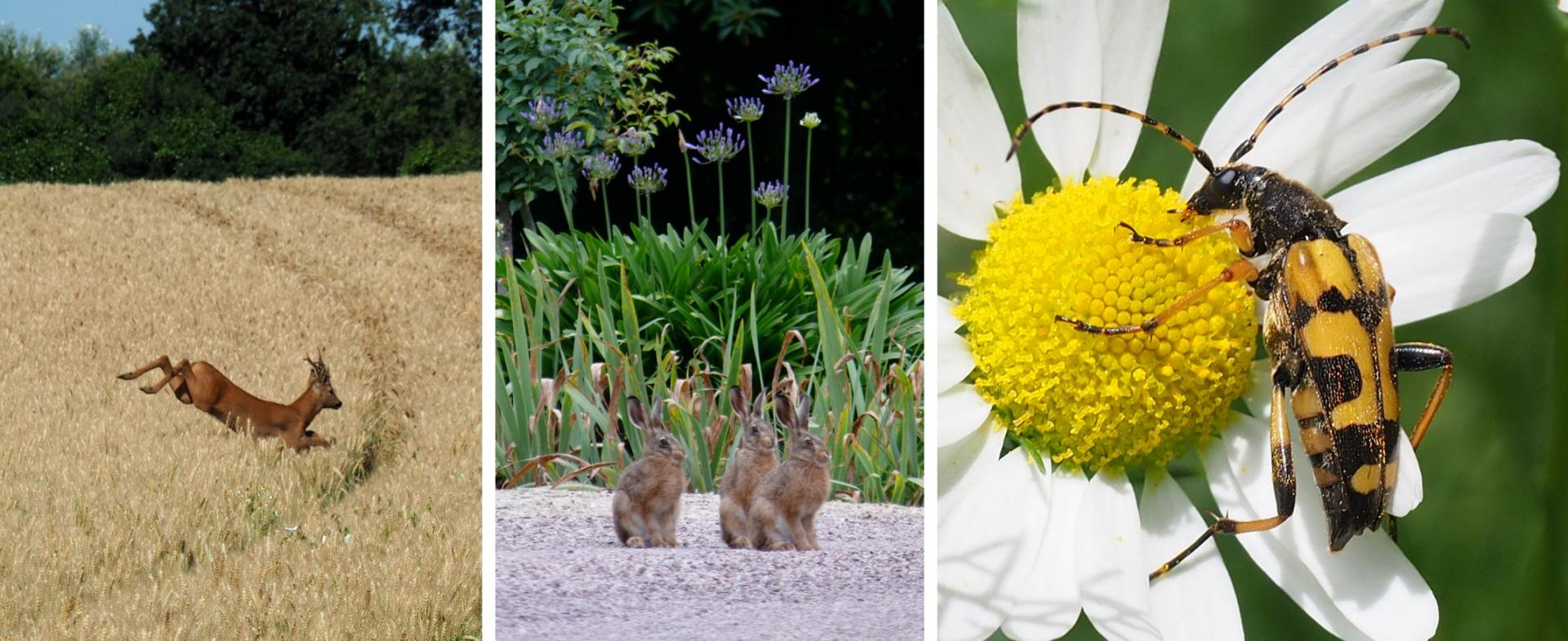 Baniere faune et flore
