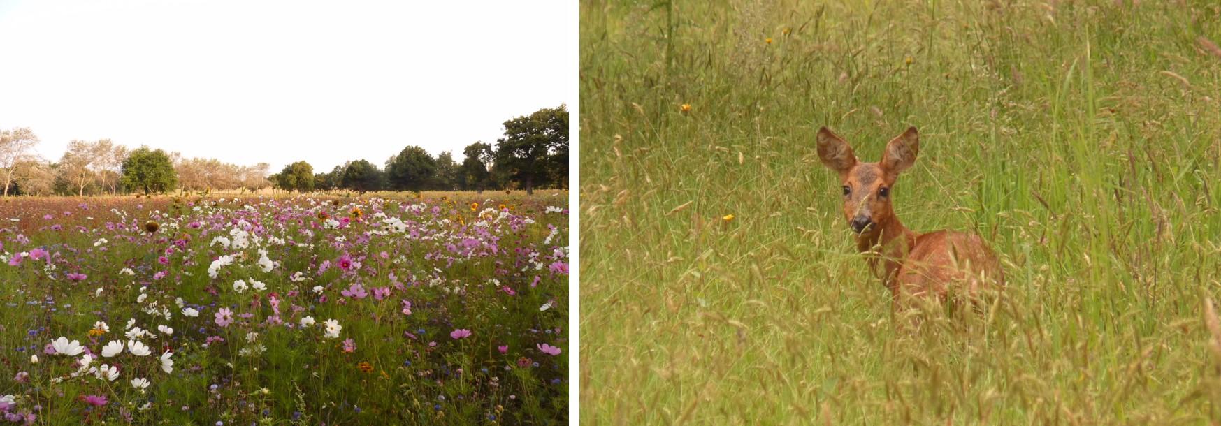 Banniere jachere fleurie et chevreuil 1