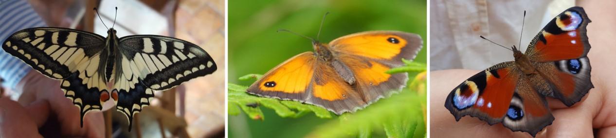 Banniere papillons