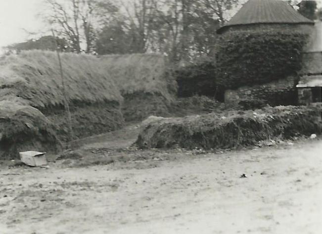 Ferme de la bardoulais en 1951 3