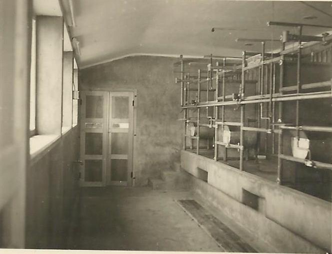 Salle de traite de la bardoulais en 1956